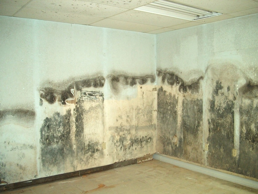 Amazing Mold Remediation Hacks