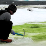 Antarctica's snow turning green due