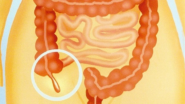 What Does the Appendix Do