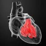 What Does It Mean to Have an Enlarged Heart?