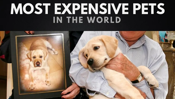 most expensive pet in the world